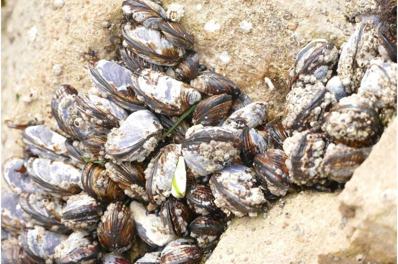 ocean clams