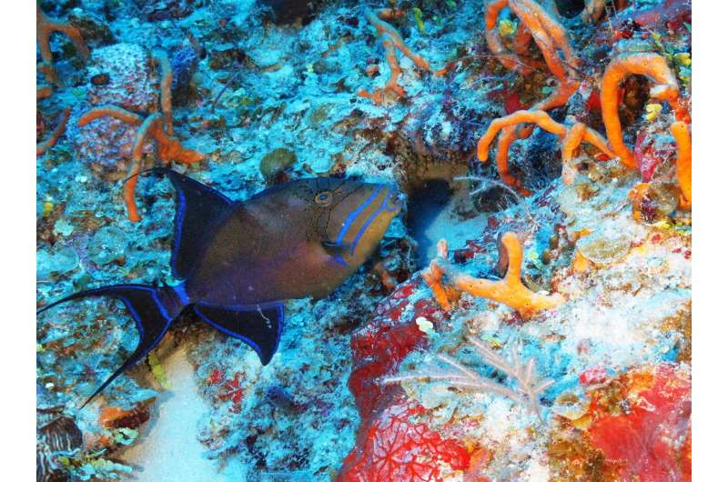 Ocean exploration uncovers one of Cuba's hidden natural treasures