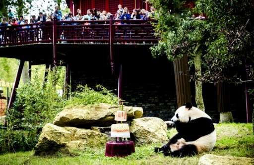 Officials decided to hold their birthday on August 8, the eighth day of the eighth month, figures which according to Chinese cul