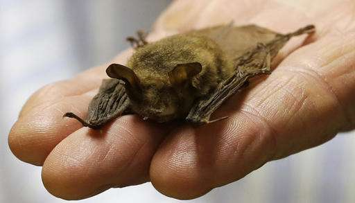 Ohio critics hope bats might slow down pipeline project