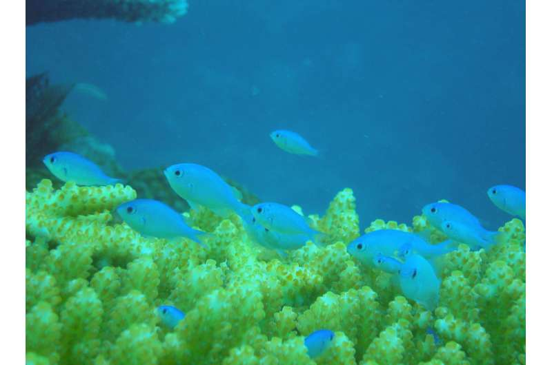 Oil impairs ability of coral reef fish to find homes and evade predators