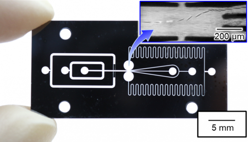 On-chip pumps achieve high-speed sorting of large cells