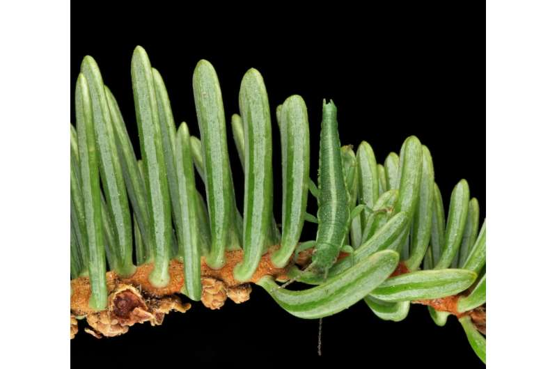 One-of-a-Kind? Or Not. USU Evolutionary Biologist Studies Formation of New Species