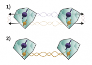 One step closer to the quantum internet by distillation