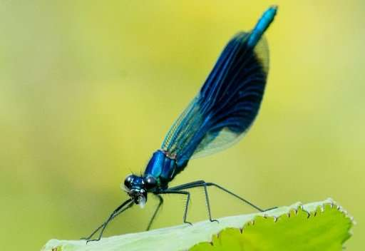 Over the past 27 years, resesarchers found an average decline in insect populations of 76 percent, with the effects appearing wo
