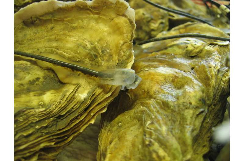 Oysters close their shells in response to low-frequency sounds