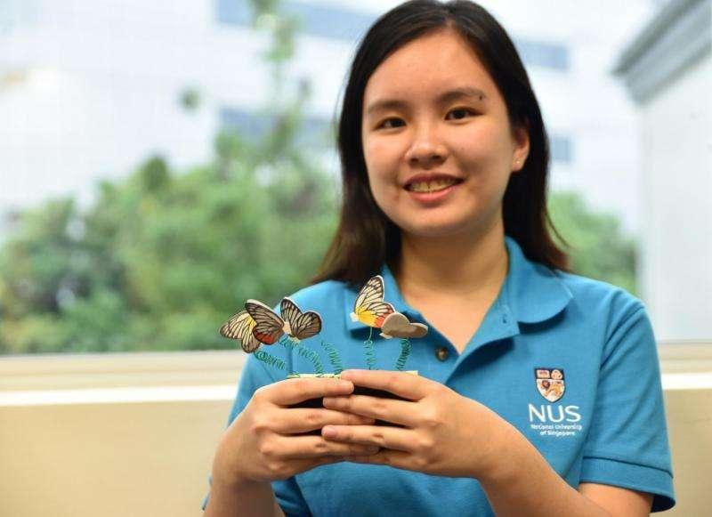 Painted Jezebel butterflies deter predators with flashy wing colours