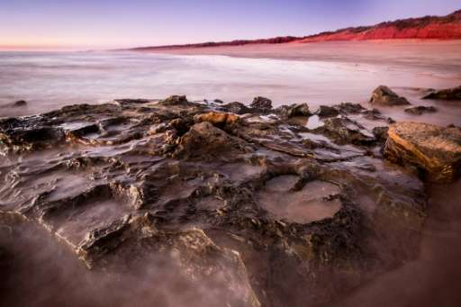 Palaeontologists say dinosaur tracks found in ancient rocks in Westerm Australia are the most diverse such discovery in the worl