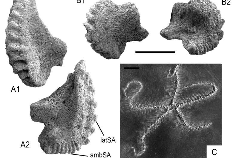 Paleozoic echinoderm hangover: Waking up in the Triassic