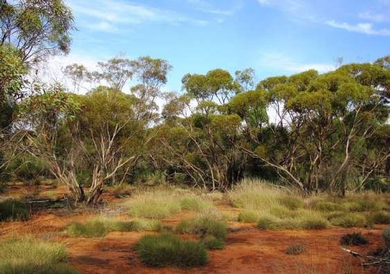 Past climate a better predictor of soil carbon than current climate