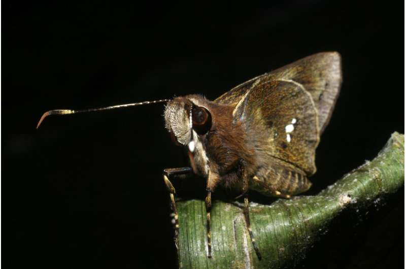 Penn collaboration produces surprising insights into the properties of butterfly wings