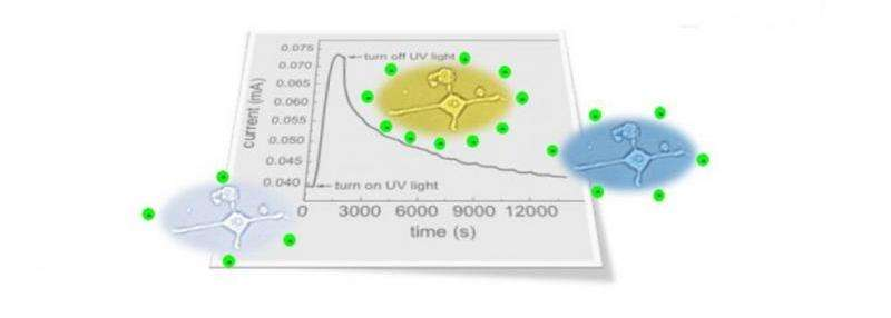 'Persistent photoconductivity' offers new tool for bioelectronics