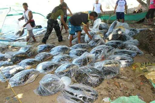 Philippine police said Friday they had seized 70 dead hawksbill marine turtles, a critically endangered species illegally traffi
