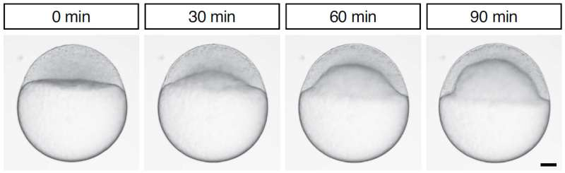 Physical basis of tissue coordination uncovered