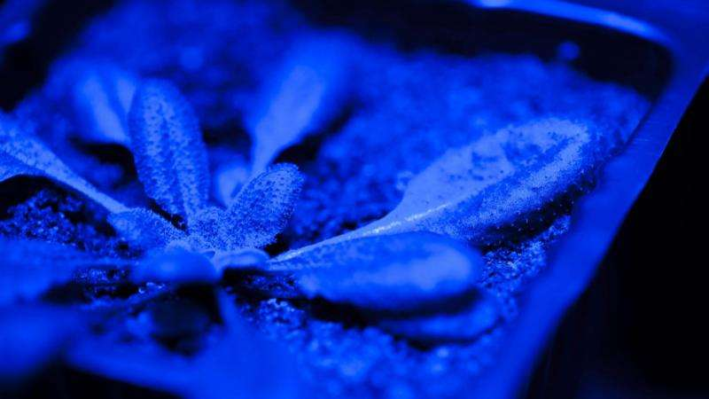 Plants forget stressful weather events to rapidly recover