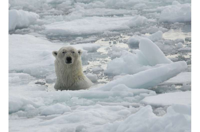 Polar bear blogs reveal dangerous gap between climate-change facts and opinions