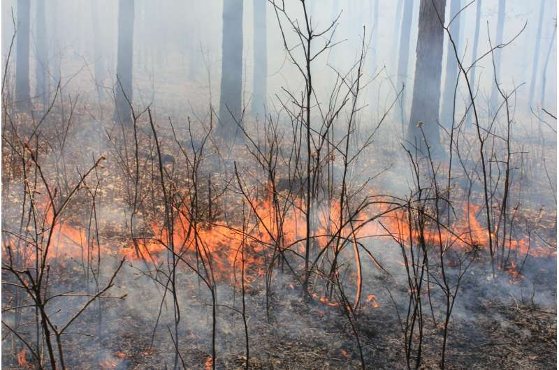 Prescribed forest fire frequency should be based on land management goals