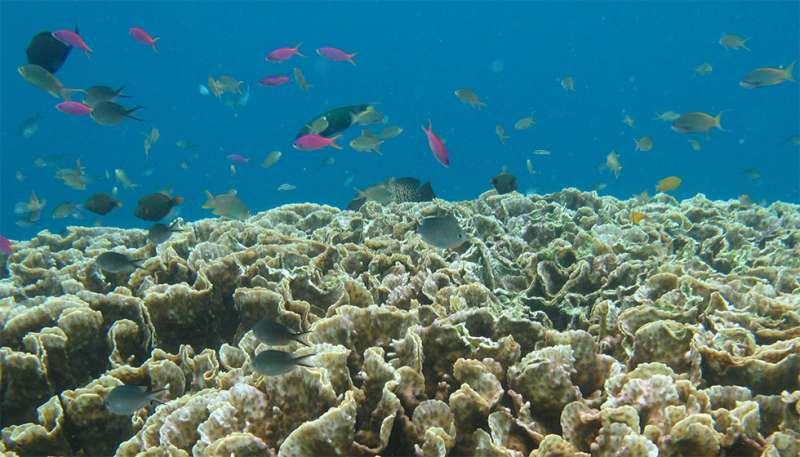 Preserving coral reefs needs new technologies