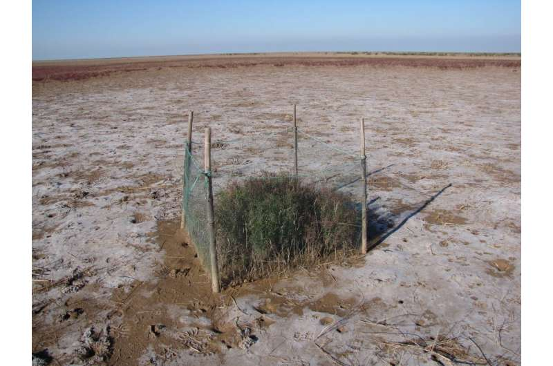 Pressures from grazers hastens ecosystem collapse from drought