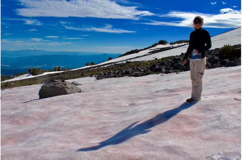 Pretty in pink: Some algae like it cold