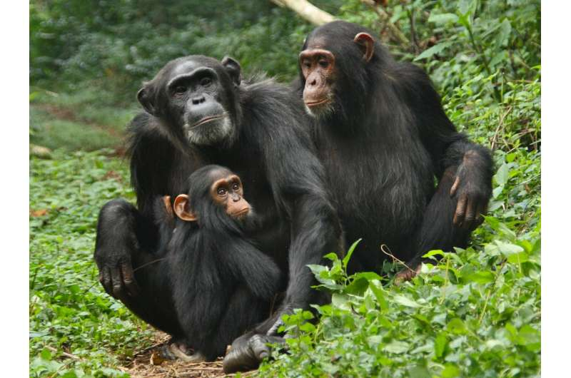 Primate-parasite network analyses show how germs jump from host to host
