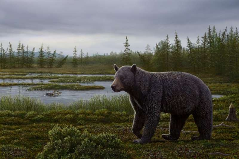 Primitive fossil bear with a sweet tooth identified from Canada's High Arctic