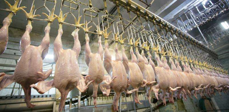 Q&A with food safety expert on why U.S. poultry is banned in the E.U.