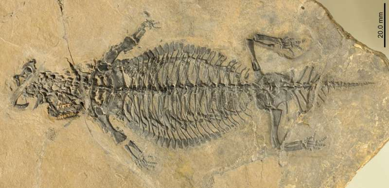 Rare, exceptionally preserved fossil reveals lifestyle of ancient armor-plated reptile