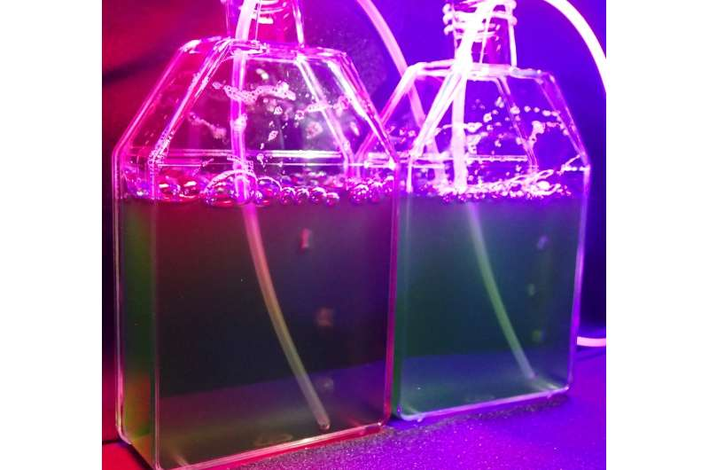 Red and violet light reset the circadian clock in algae via novel pathway