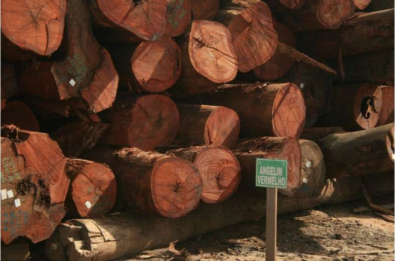 Reduced impact logging still harms biodiversity in tropical rainforests