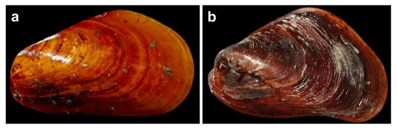 Research decoding the first deep-sea mussel genome published in Nature