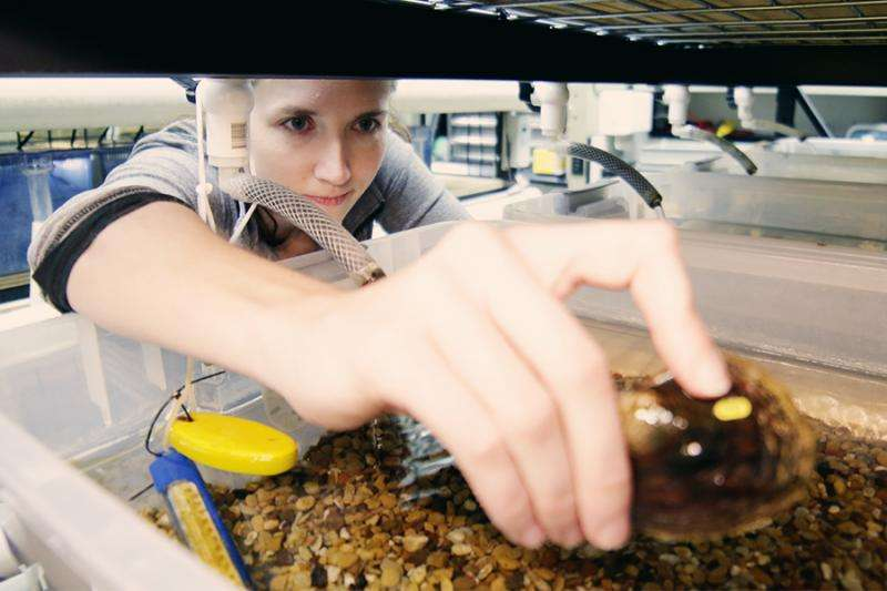 Researcher looks into declining Texas mussel populations