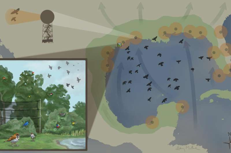Review highlights challenges faced by birds in the Gulf of Mexico