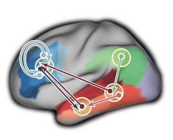 Rhythmic firing of brain cells supports communication in brain network for language