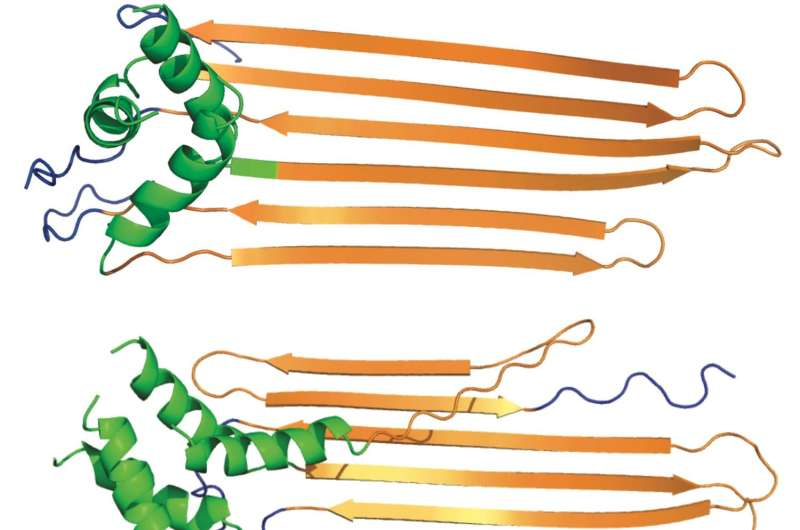 Rice U. scientists add to theory about Huntington's mechanism