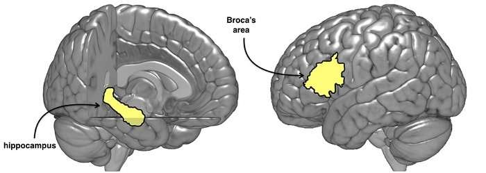 Right brain also important for learning a new language