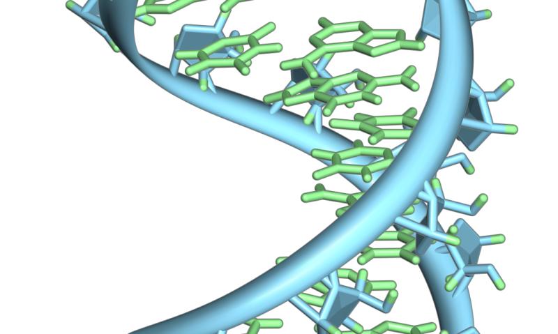 Hypoxia, a feature inside solid cancer tumors, reprograms methylation of ribosomal RNAs thumbnail