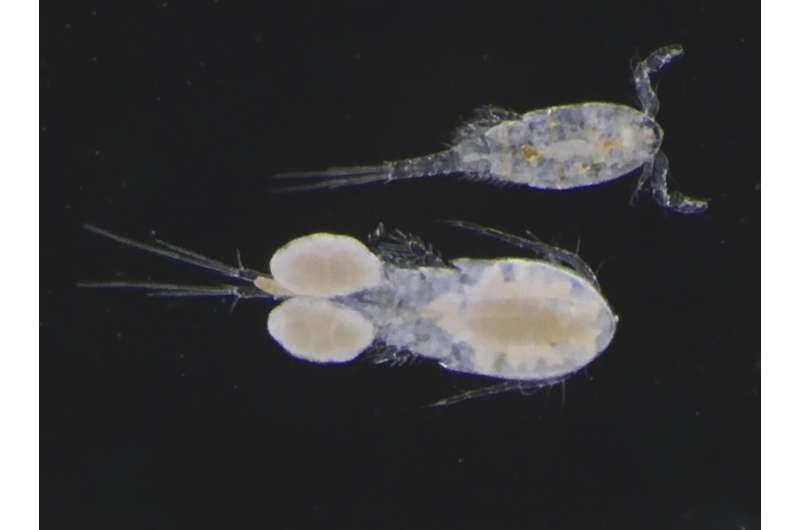 Road salt alternatives alter aquatic ecosystems