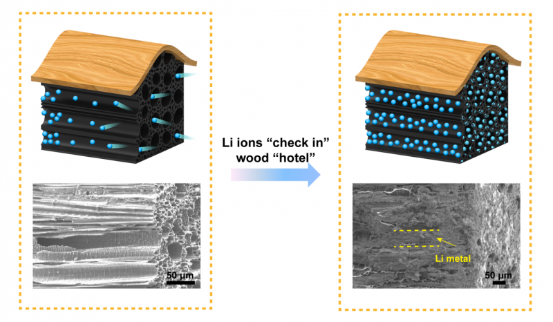 Safer batteries made with wood