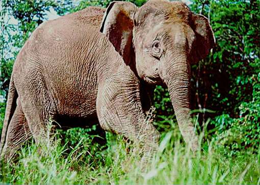Saving rare elephants with tourism snaps