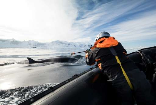 Scientists attached tiny cameras and electronic tags to humpbacks to better understand what they do underwater as they study how