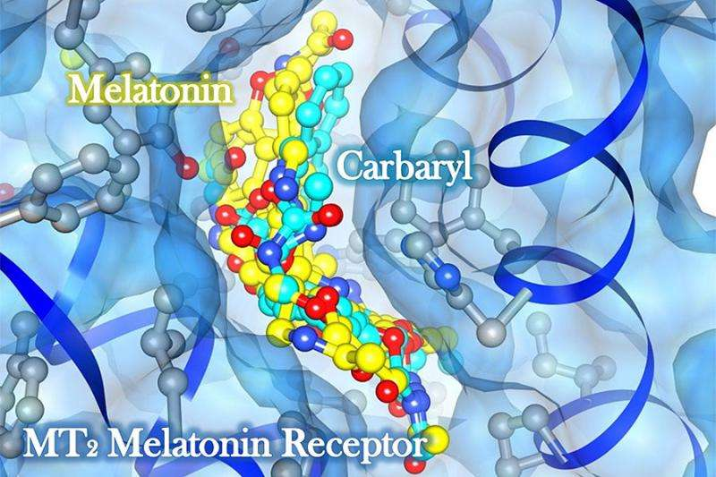 Scientists provide first evidence that carbamates can upset circadian rhythms