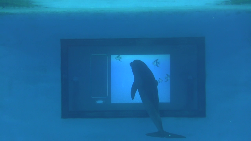 Scientists to probe dolphin intelligence using an interactive touchpad
