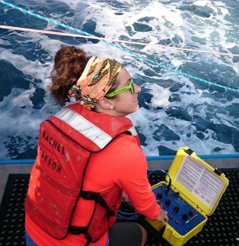 Scientists track porpoises to assess impact of offshore wind farms