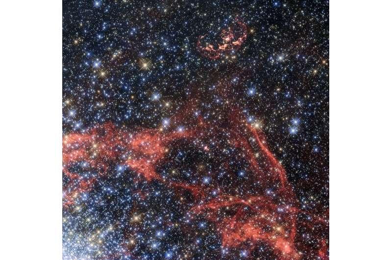 Search for stellar survivor of a supernova explosion