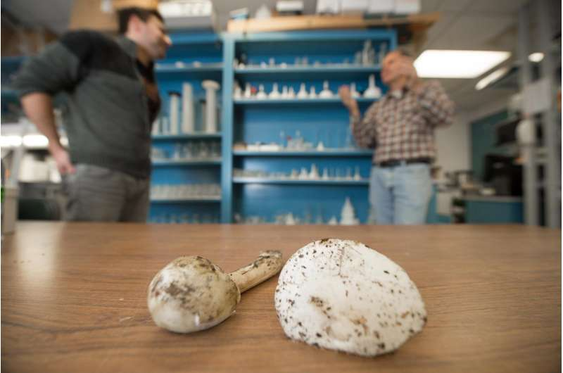 Sequencing poisonous mushrooms to potentially create medicine