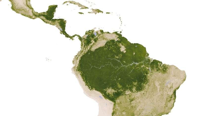 Shallow soils promote savannas in South America