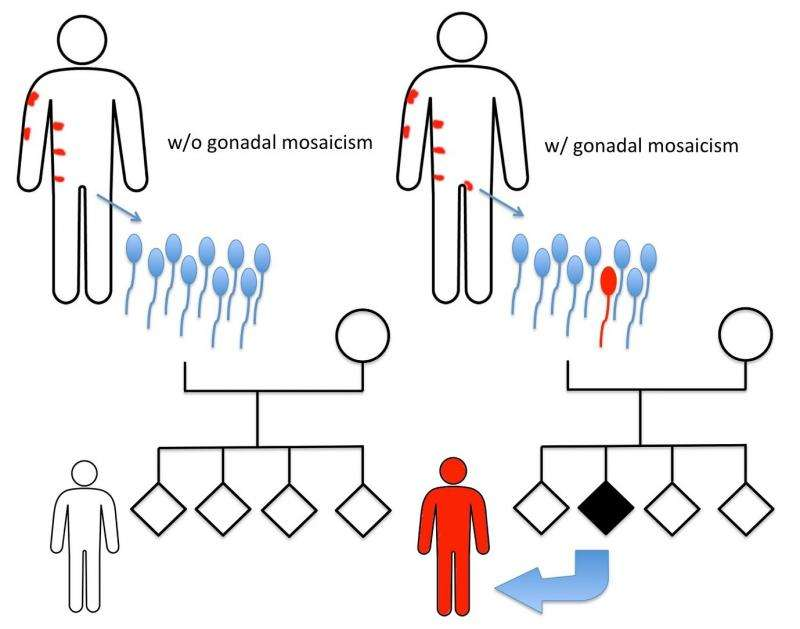 Skin disease caused by sperm cell transmission of keratin mutation