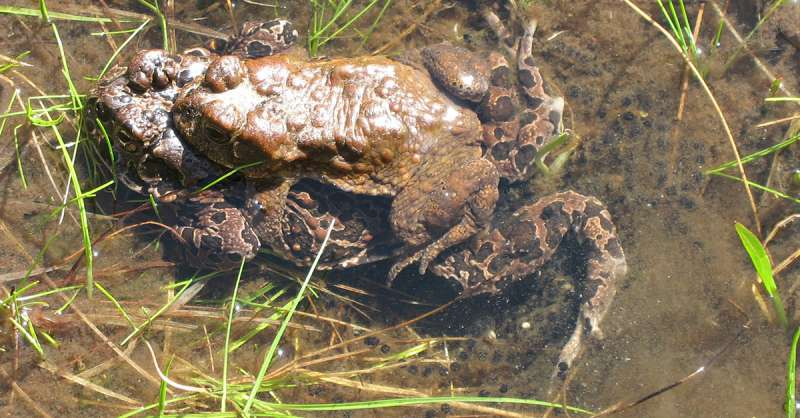 Small variations in breeding pools make for big differences in Yosemite toad use