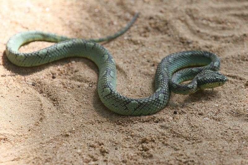 Snakebites cost Sri Lanka more than $10 million